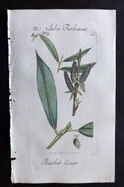 Sowerby C1805 Hand Col Botanical Print. Basket Osier Willow 1344